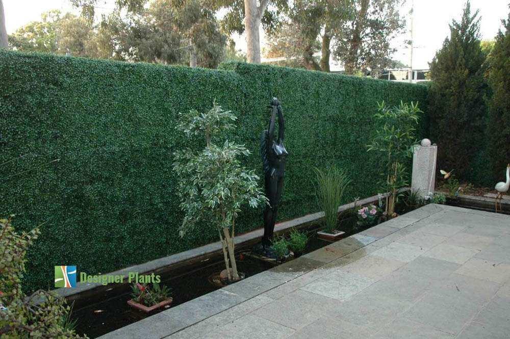 Box Wood Hedges Designer Plants