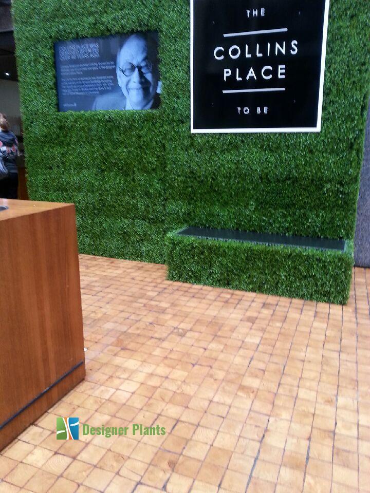 Boxwood Hedge Screening