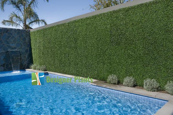 Poolside Boxwood Screen
