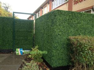 Boxwood Hedging used for privacy and security