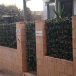 Photinia Vertical Garden