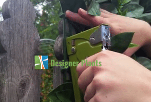 install hedges staple gun