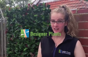 georgina oxley designer plants