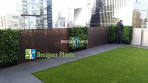 We install artificial hedges in both residential and commercial premises - Photinia Hedge