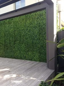 Jasmine / Camellia screen fake hedge