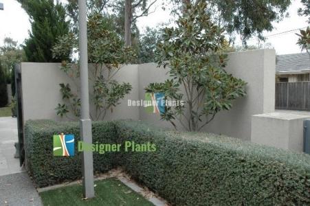 Before an artificial vertical garden was installed.
