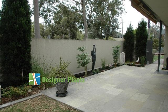 This courtyard previously had a number of artificial plants and a plain render wall.