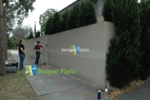 Designer Plants installing artificial hedge screens.