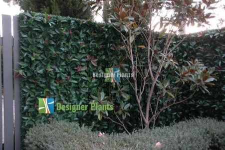 After an artificial vertical garden was installed.