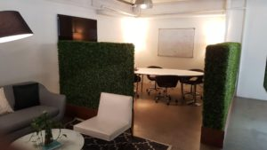 Boxwood Hedges in planters for offices and privacy
