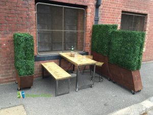 Boxwood Cafe Hedges