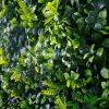 Artificial Green Wall Close Up