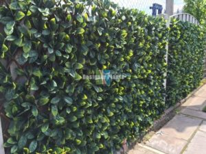 Extendable Laurel Trellis