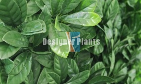 Green Laurel Artificial Vertical Garden