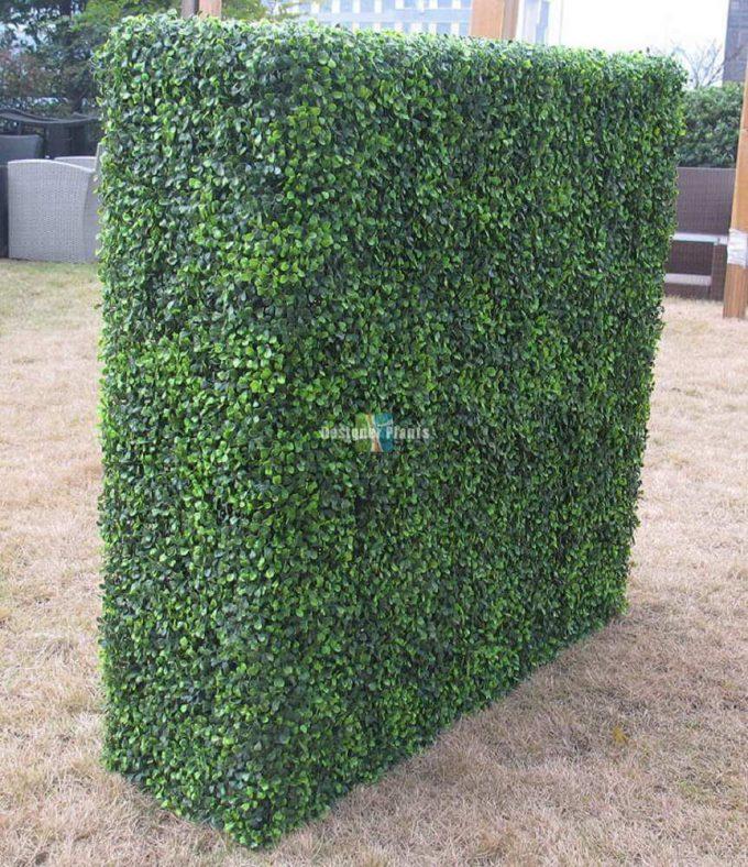 Boxwood Hedges1