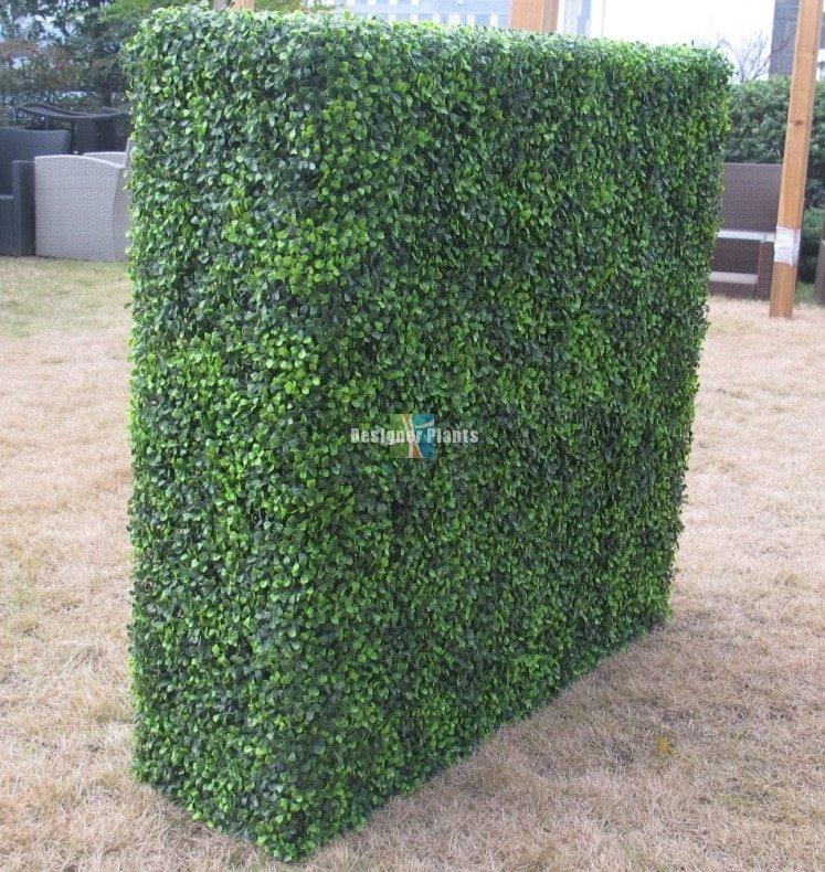 Large Portable Mixed Boxwood Hedges