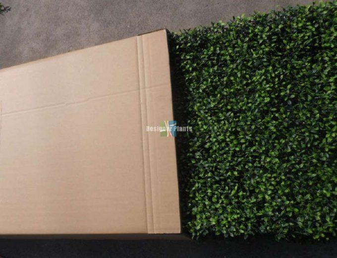 Unboxing Boxwood Hedges