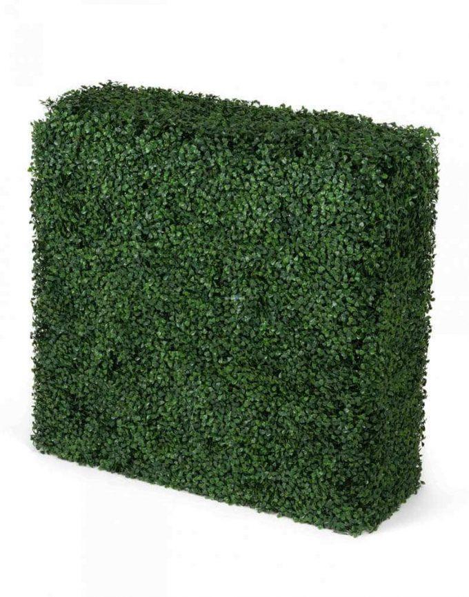 Boxwood Hedge2