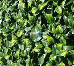 Jasmine Vertical Garden