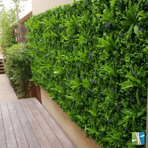 Lavandula green wall transformation July