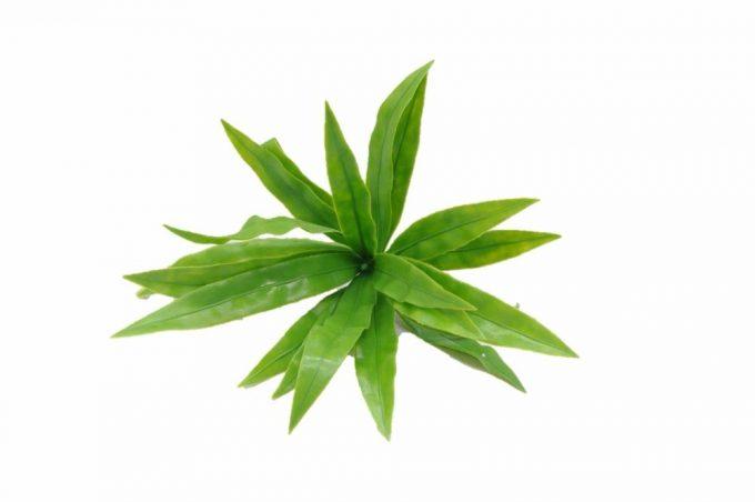 Artificial Plant-Aloe Vera Stem UV Resistant 20cm