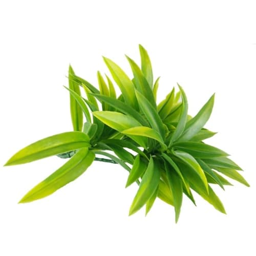 Dracaena (Yucca) Stem UV Resistant