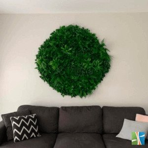Green tropics green wall disk in lounge room
