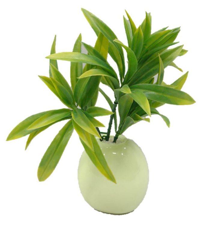 Dracaena (Yucca) Stem UV Resistantpot