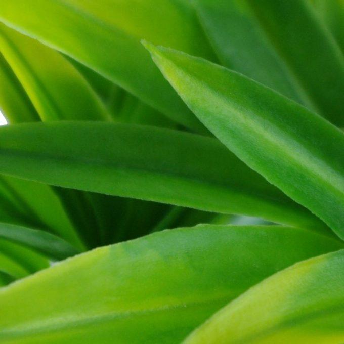 Artificial Plant-Dracaena (Yucca) Stem UV Resistant closeup