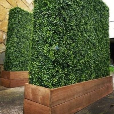 Deluxe Boxwood Hedges With Planters Various Sizes (Merbau Planters) (Wheels Optional)