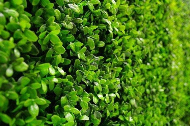 Deluxe Buxus Hedge Leaf Screen / Panels UV Resistant SAMPLE-CLOSEUP