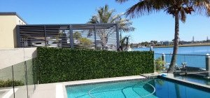 Social - Artificial garden hedge next to a pool, with a lake in the background and palm trees surrounding it