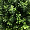 Close up of the green shrub foliage
