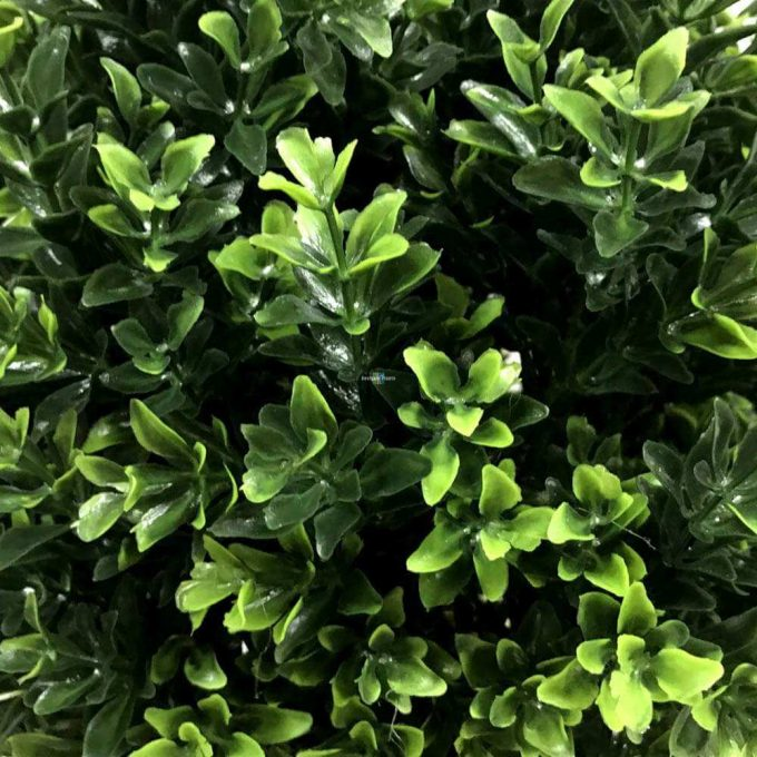 Close up of the green shrub foliage