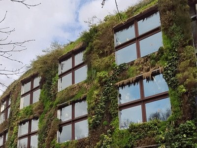 Real Artificial Vertical Garden and green wall in United Kingdom