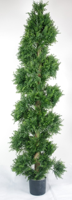 High quality uv cypress tree spiral