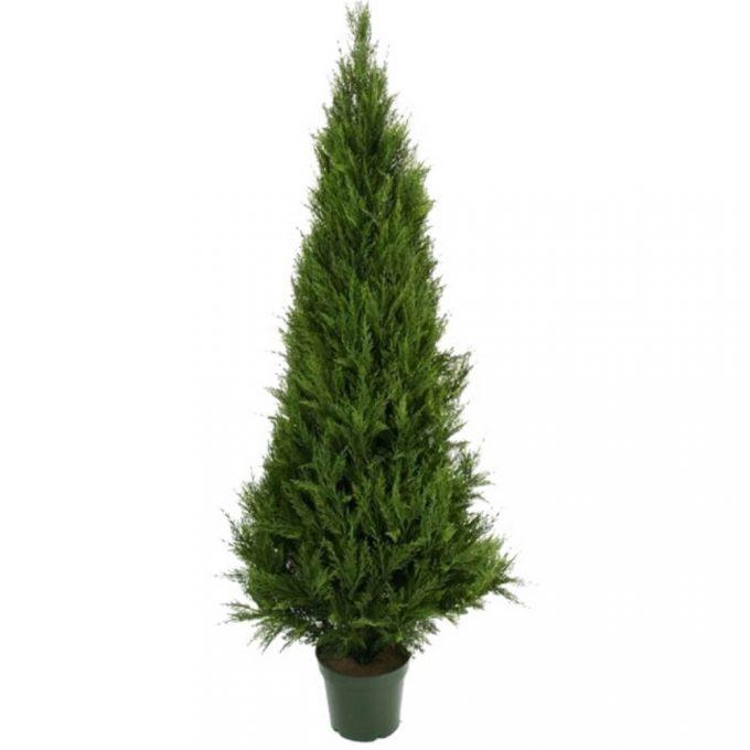 fake tall cypress tree