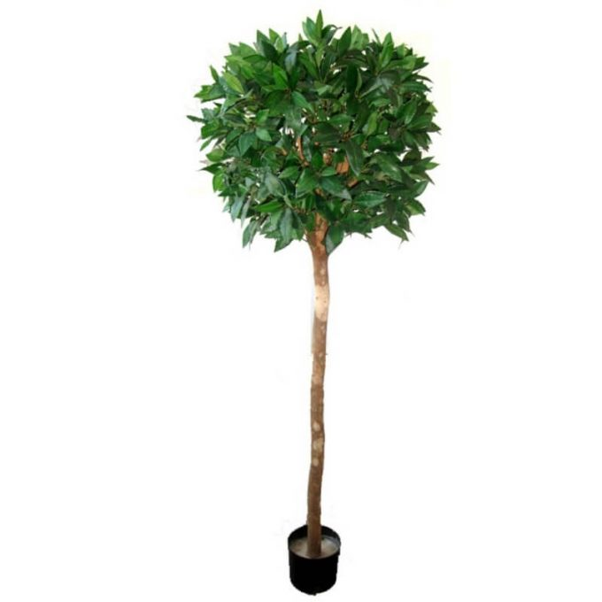 fake topiary ficus tree