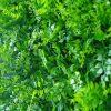 Artificial Plant -Mediterranean Fern Vertical Garden / Green Wall UV Resistant 1m x 1m