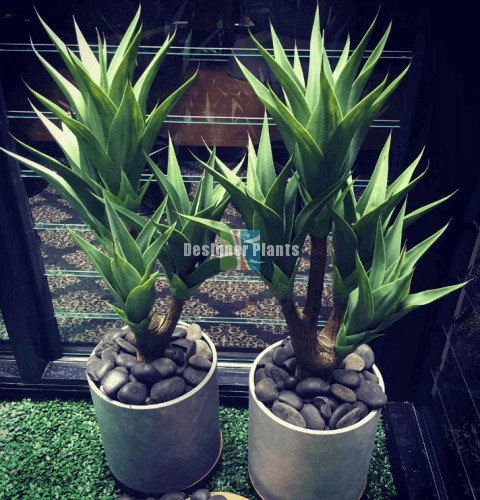 High Quality Artificial Agaves with multiple heads