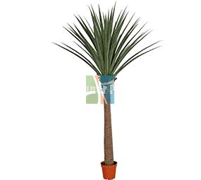 Large artificial yucca dracaena