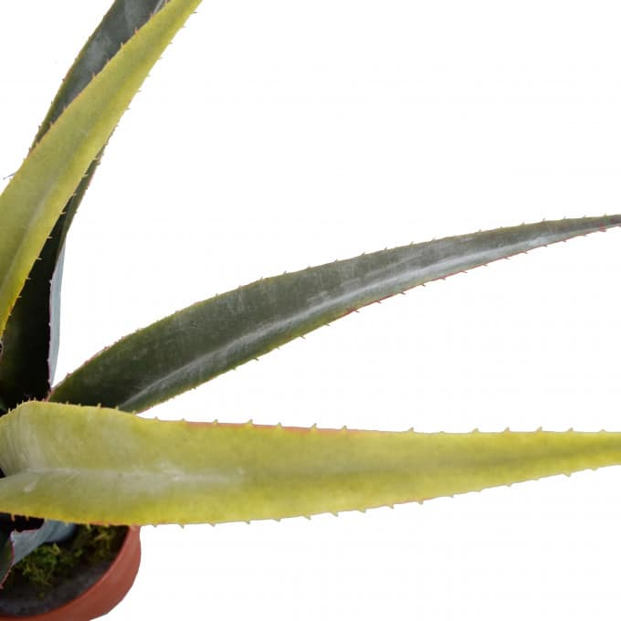 artificial dracaena leaves