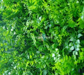 Mixed vertical garden fern panel.
