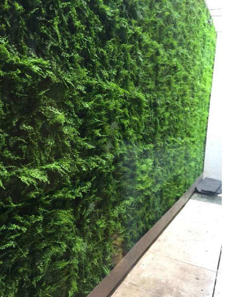 Installed green wall panels with dense fern