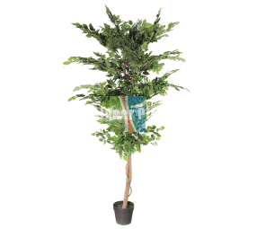 High quality natural trunk fake ficus