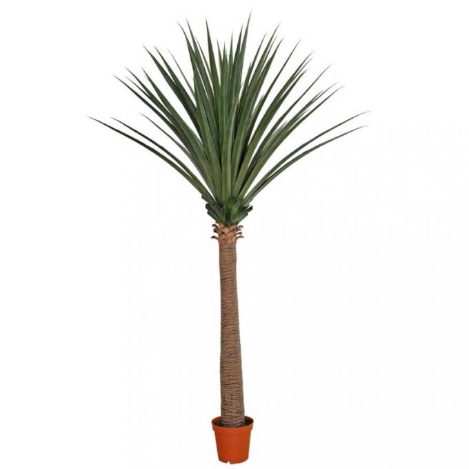 very tall fake yucca tree
