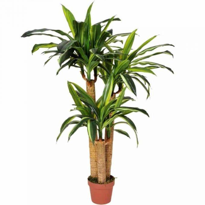 multi trunk fake yucca plant (1)
