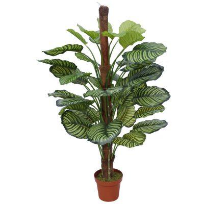 pond leaf plant