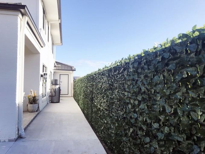 Ivy Leaf Roll 3m X 1m (Camellia style)