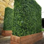Artificial UV Boxwood Hedge with Timber Planter